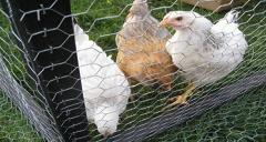 About Protective Animal Enclosures - Galvanized Wire Mesh