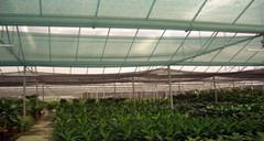 Different Percentages of sun shade netting for different plant