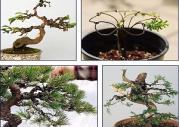 What diameter aluminum wire is used for bonsai plants ? And precautions when winding aluminum wire?